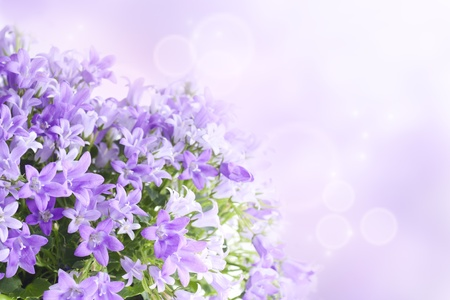 purple flowers: Beautiful spring background with campanula bouquet. Stock Photo
