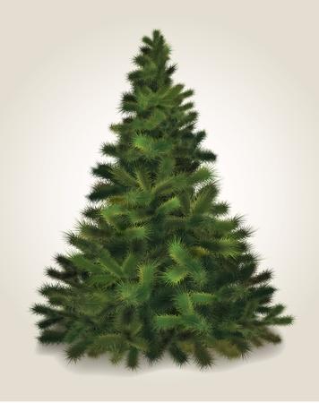 Christmas tree. Realistic illustration of fluffy pine tree