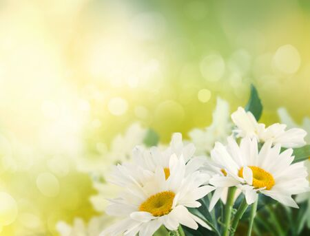 Summer or spring abstract bokeh background with daisy flowers photo