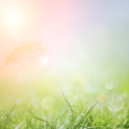 Spring or summer abstract nature background with grass in the meadow and sunset sky in the back Stock Photo