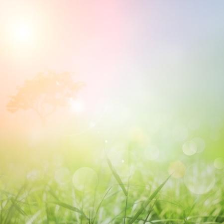 Våren eller sommaren abstrakta bakgrund med gräs på ängen och solnedgång himmel i ryggen Stockfoto
