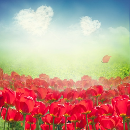 beautiful red tulips close up: Valentines card. Tulip field with grass meadow and  heart clouds on blue sky