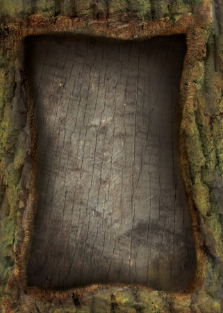 Nature forest series. Tree bark with tree texture and copyspace.  photo