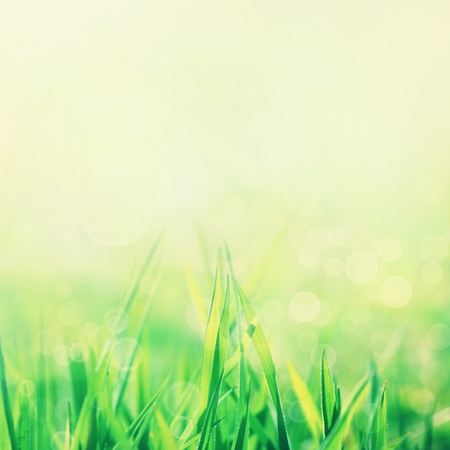 Spring or summer abstract nature background with grass in the meadow and blue sky in the back photo