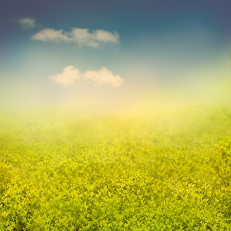 Summer or spring background with view over the hedge to the sky Stock Photo - 12440830