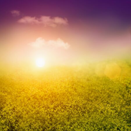 Summer or spring background with view over the hedge to the sky Stock Photo - 12440807