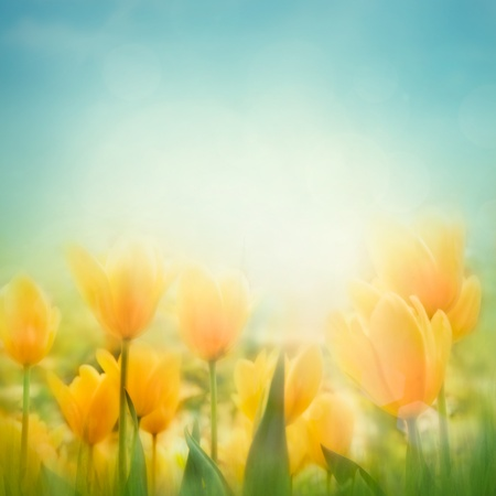 blur: Spring Easter background with beautiful yellow tulips Stock Photo