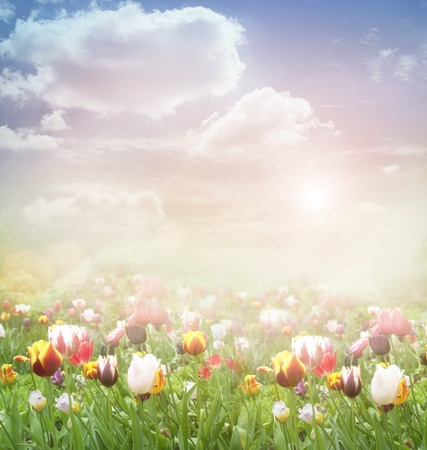 Tulip field  Easter spring background with tulips in a beautiful meadow and cloudscape photo