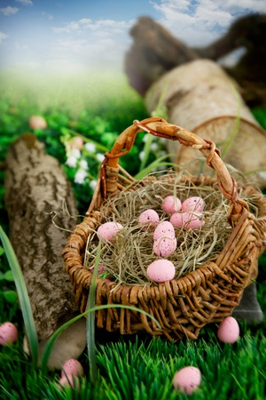 Colorful Easter eggs  Holiday nature concept with easter hunt  Eggs in the sunny meadow photo