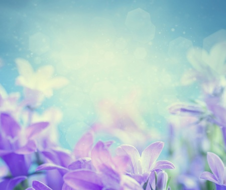 flowers bokeh: Beautiful spring background with campanula bouquet. Stock Photo