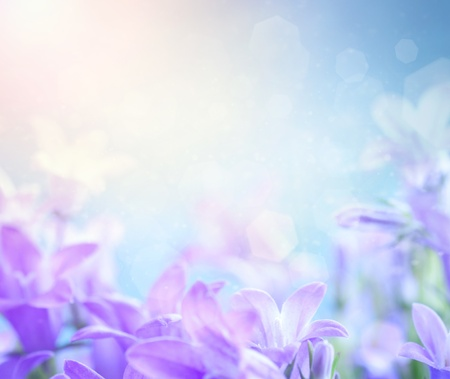 flowers bokeh: Beautiful spring background with campanula bouquet