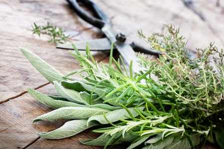 Freshly harvested herbs with old antique scissors on wood background  Fresh sage, thyme, mint and rosemary leaves