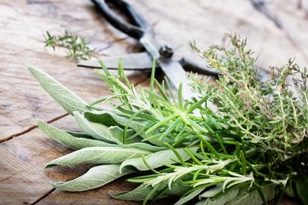 herbs: Hierbas recién cosechadas con viejas tijeras antiguas sobre fondo de madera salvia fresca, tomillo, menta y hojas de romero
