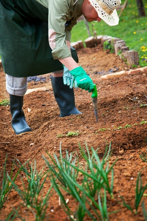 Spring garden concept. Male is doing garden work Stock Photo - 13301748