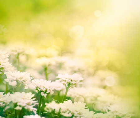 Spring or summer floral abstract background. Flower design with copyspace and bokeh Stock Photo - 13404390