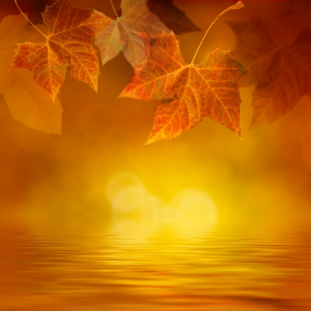 Autumn design background with colorful green and yellow leaves falling from the tree Stock Photo - 13712324