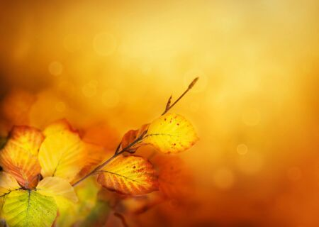 Colorful Autumn leaves background with bokeh lights photo