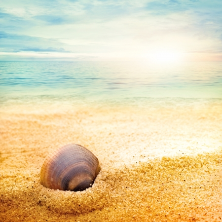 Sea shell background  on fine goden sand with copyspace photo