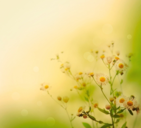 yellow wildflowers: Fresh wildflowers over colorful background  Spring or summer floral background