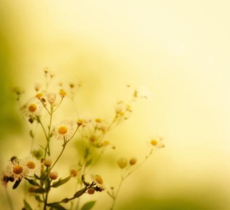 fiori di campo: Fiori freschi su sfondo colorato primavera o estate sfondo floreale