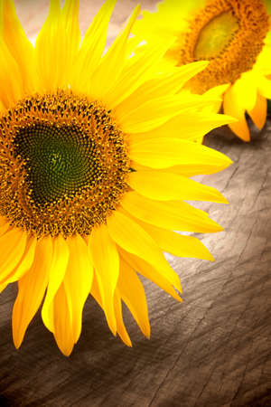 Sunflowers on wooden background photo
