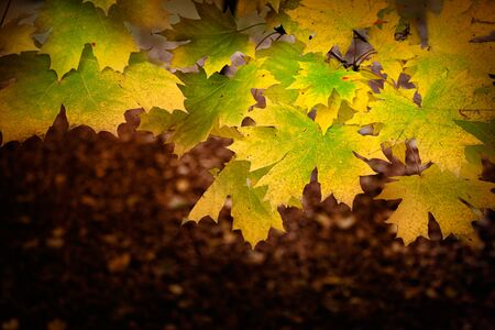 Colorful Autumn  fall leaves background with season colors Stock Photo - 14706799