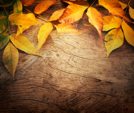 Autumn forest background  Fall Acorns on tree bark and season colorful leaves  with copyspace photo