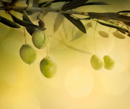 Summer olives design background with fresh olive branch and bokeh lights Stock Photo - 14850873