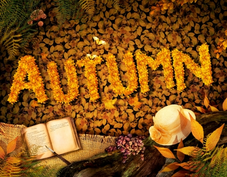 Autumn season concept design. Fall background with text in beautiful yellow forest. Vintage design with autumn fruit, mushrooms, leaves and book diary. photo
