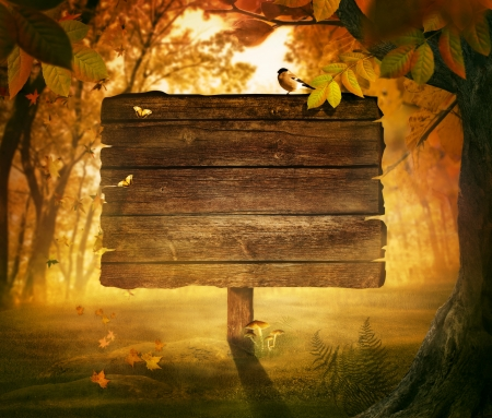 Autumn design - Forest sign. Wooden sign in autumn valley with woods,  tree, falling colorful leaves, mushrooms and bird. Space for your autumnal text.