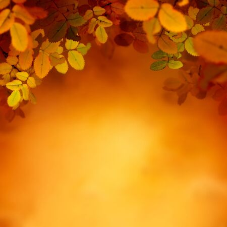 Autumn design background with colorful red and yellow leaves falling from the tree. Fall season concept with copyspace. Stock Photo - 14982528