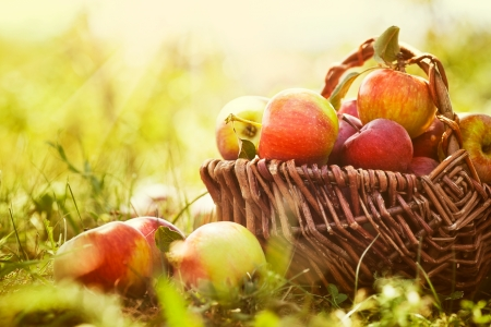 Organic apples in basket in summer grass. Fresh apples in nature photo