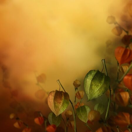 Autumn design. Border floral background with lantern flowers in season colors. Fall decoration concept. Stock Photo - 15035840