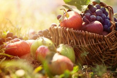 corbeille de fruits: Fruits bio dans le panier dans l'herbe d'�t�