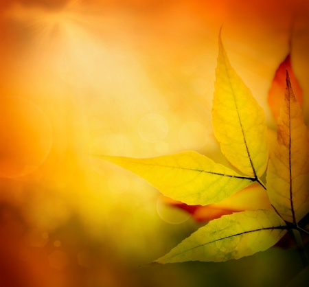 Autumn background with falling leaf. Colorful  fall season concept with leaves background and bokeh lights Stock Photo - 15618001