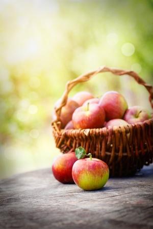 Färsk skörd av äpplen. Natur tema med röda vindruvor och korg på trä bakgrund. Nature frukt koncept.