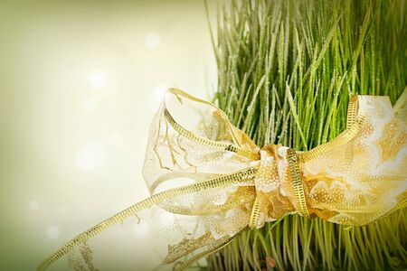 Christmas wheat. Christmas background with traditional wheat planted for St.Lucy. Stock Photo - 16548813