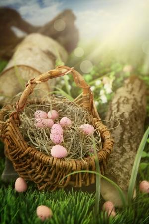 arbol de pascua: Huevos de Pascua coloridos Holiday naturaleza concepto cacería con los huevos de Pascua en el prado soleado