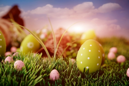 easter tree: Colorful Easter eggs. Holiday nature concept with easter hunt. Eggs in the sunny meadow