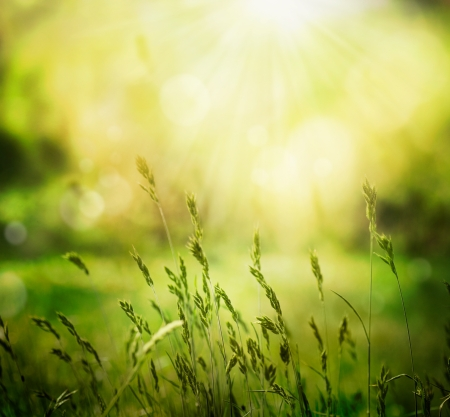 soft colors: Spring or summer abstract nature background with grass in the meadow and sunset in the back