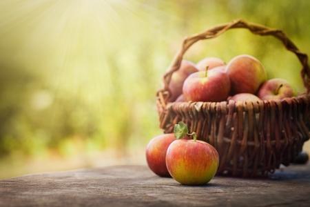 manzana verde: Cosecha fresca de manzanas Tema de la naturaleza con las manzanas rojas y la canasta sobre fondo de madera concepto de fruta natural Foto de archivo