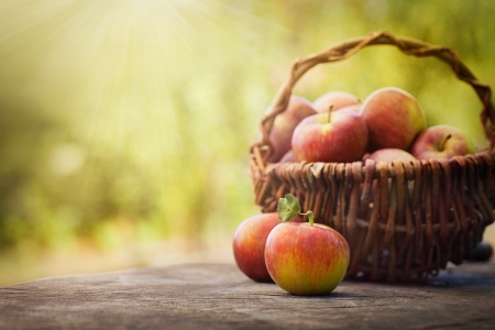 apples basket: Fresh harvest of apples  Nature theme with red apples and basket on wooden background  Nature fruit concept