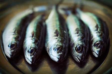 sea food: Raw mackerel fish. Sea food Stock Photo