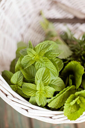 Fresh herbs. Melissa, rosemary and mint in rustic setting photo
