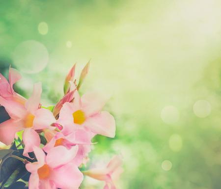 Flower background  Spring flowers border design  Spring blossom