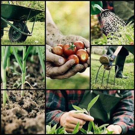 정원. 봄 원예 작업의 콜라주. 허브와 야채