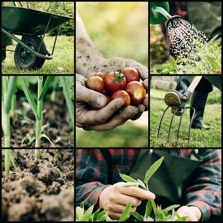 Garden. Collage of spring gardening work. Herbs and vegetables Stock Photo