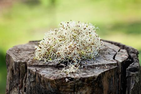 heathy: Heathy eating food. Alfalfa sprouts on wood