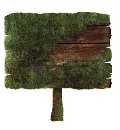 moss: Wooden sign covered in moss isolated on white. Wood sign Design element. Clipping path