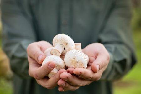 유기농 버섯입니다. 건강에 좋은 음식.